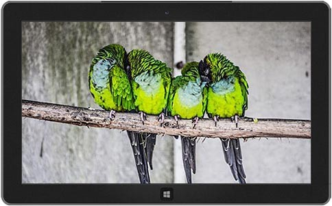 birds-feather