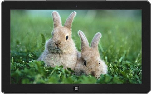 bunnies-ducklings