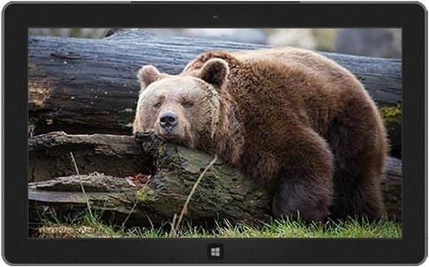 burly-bears