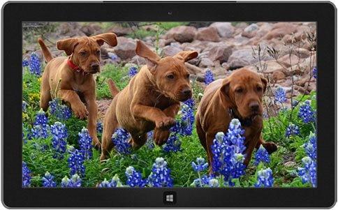playful-puppies