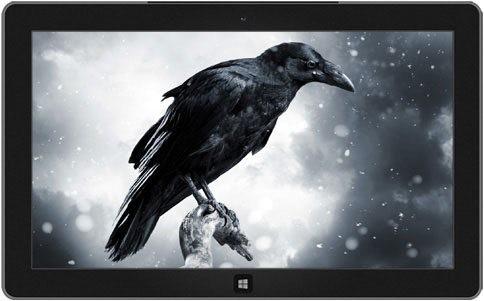 ravens-crows