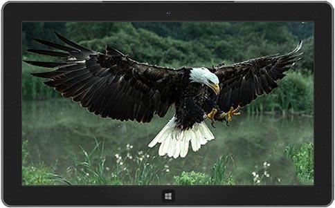 birds-prey