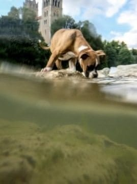 iphone-underwater-photo